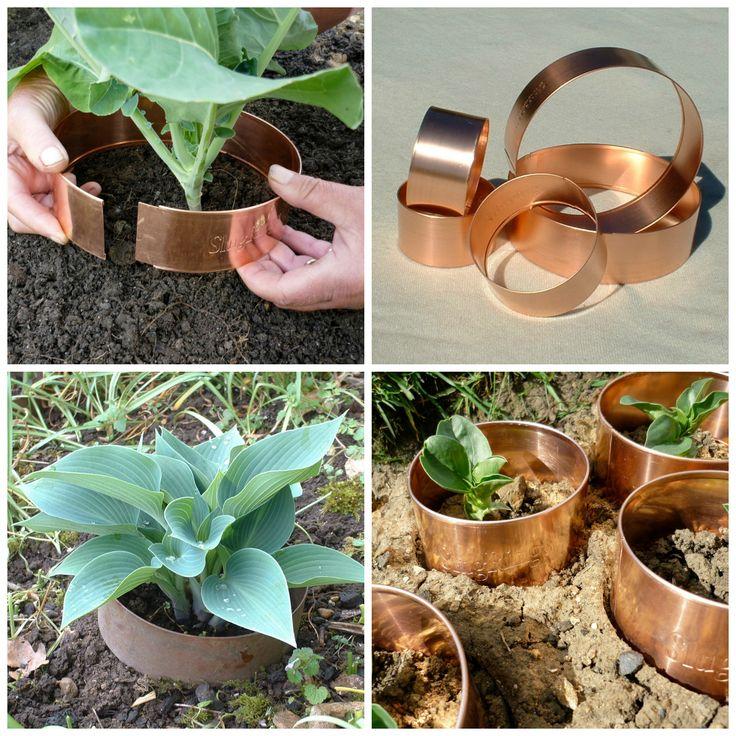 Pierścienie, obręcze miedziane dzięki którym ochronisz swoje rośliny przed ślimakami.