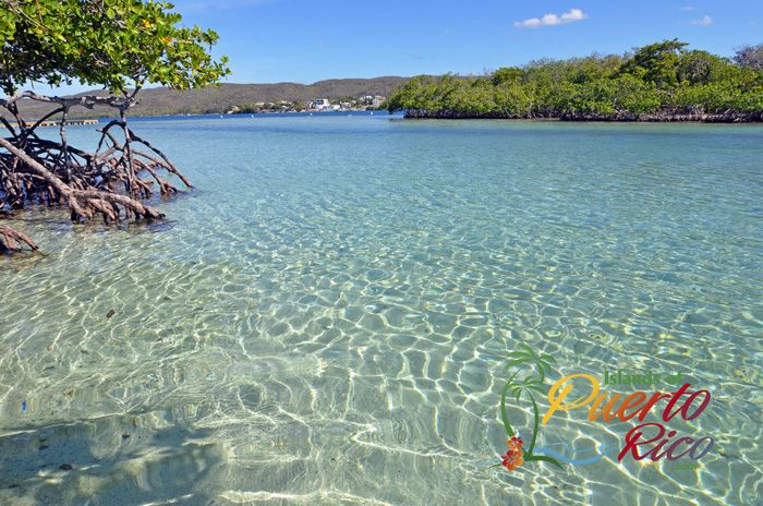 Dreamy Gilligan's Island is a secret spot in Guanica, Puerto Rico. Love Snorkeling? Come to Gilligan's, where even the kids can snorkel. Gilligan's ferry info.