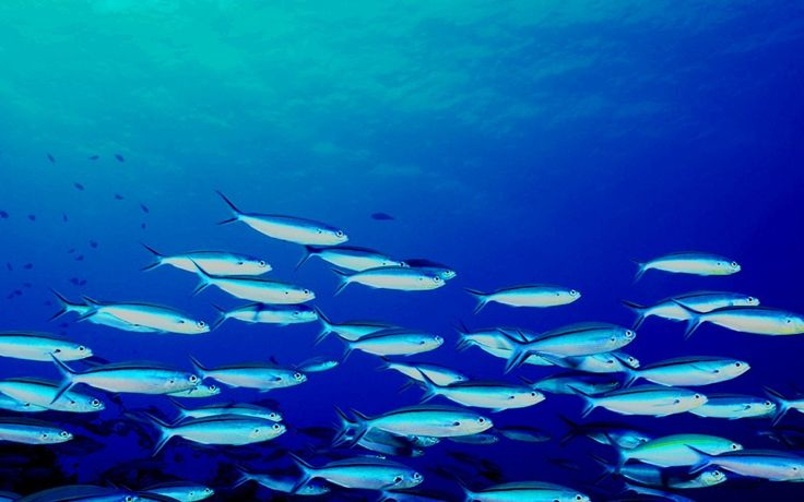 Stock Stock ~ School Of Fish
