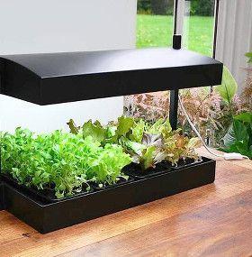 Cómo cuidar plantas de interior - Luz artificial