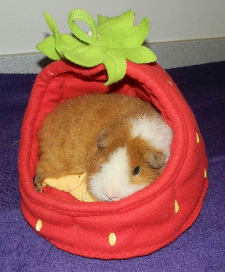 Guinea pig zone                                                                                                                                                                                 More