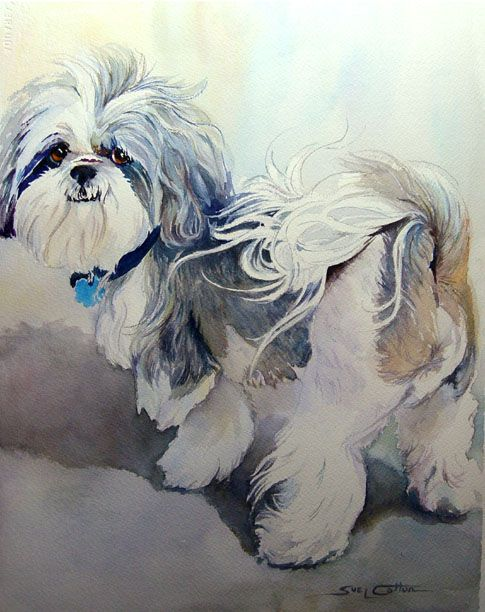 Artist, Sue Lynn Cotton - Love this watercolor!  It looks very much like my Lhasa, Toby except that he is apricot where this dog is sliver...