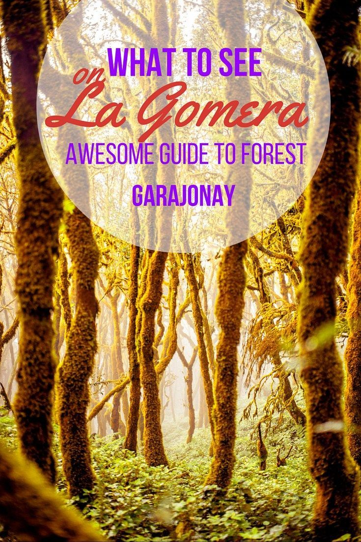 What to see on La Gomera (Awesome guide to forest Garajonay)