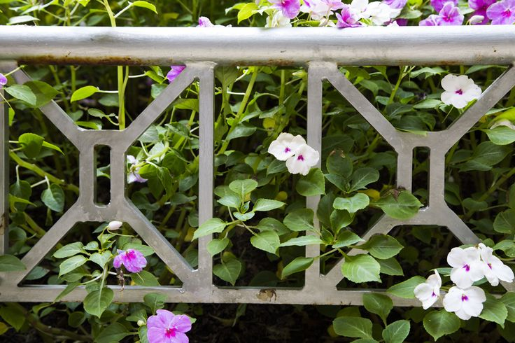 Flowers peeking through the fence at Hilltop House in Northwest Washington DC | WC Smith Apartments | Mount Pleasant Rentals