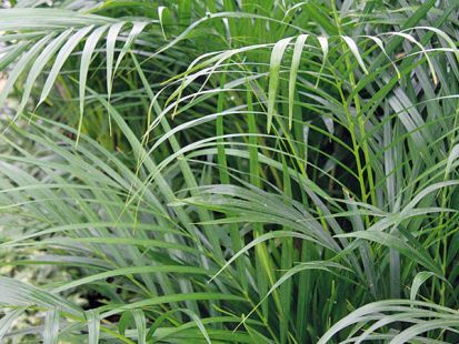Hydropónia - moderné pestovanie interiérových rastlín