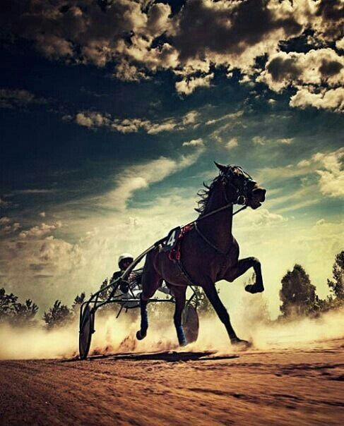 Beautiful photo of a Standardbred horse, the driver, & sulky