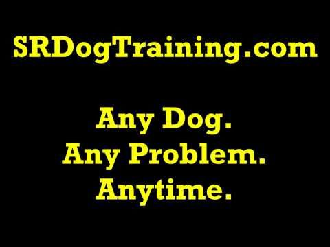 Dog Training Sounds - Baby Crying Sound Effect - YouTube