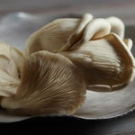 Oyster Mushrooms (Pleurotus ostreatus)  These delicate mushrooms need very little cooking. They are delicious in light creamy sauces, risottos and omlettes, and they can be used whole or sliced.