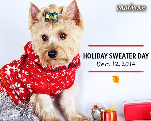 Ugly or cute, this is a day to dress up in your favourite sweater! #holiday #dog #cute #cat