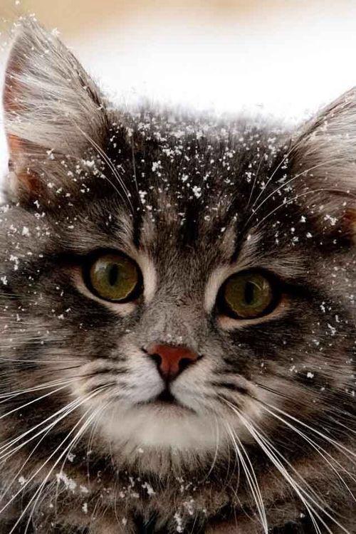 Cute kitty | cute, cat and winter