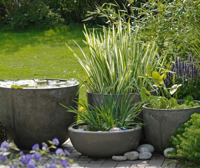 17 best images about mini bassin et plantes d 39 eau on pinterest gardens lotus and plants. Black Bedroom Furniture Sets. Home Design Ideas