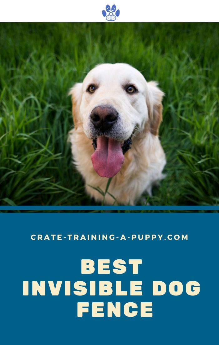 Busy Blogging Looking For A Quick Way To Keep Your Dog From Under Foot And Secure On Your Property A Way To Do It Without Buildin Dog Fence Dogs Digging Dogs