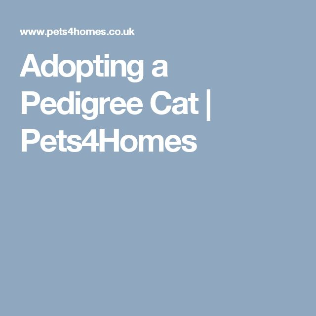 Adopting a Pedigree Cat | Pets4Homes