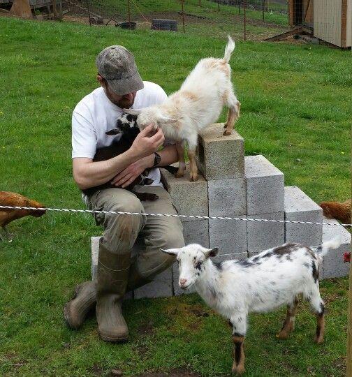 52 Best Backyard Goats Images On Pinterest