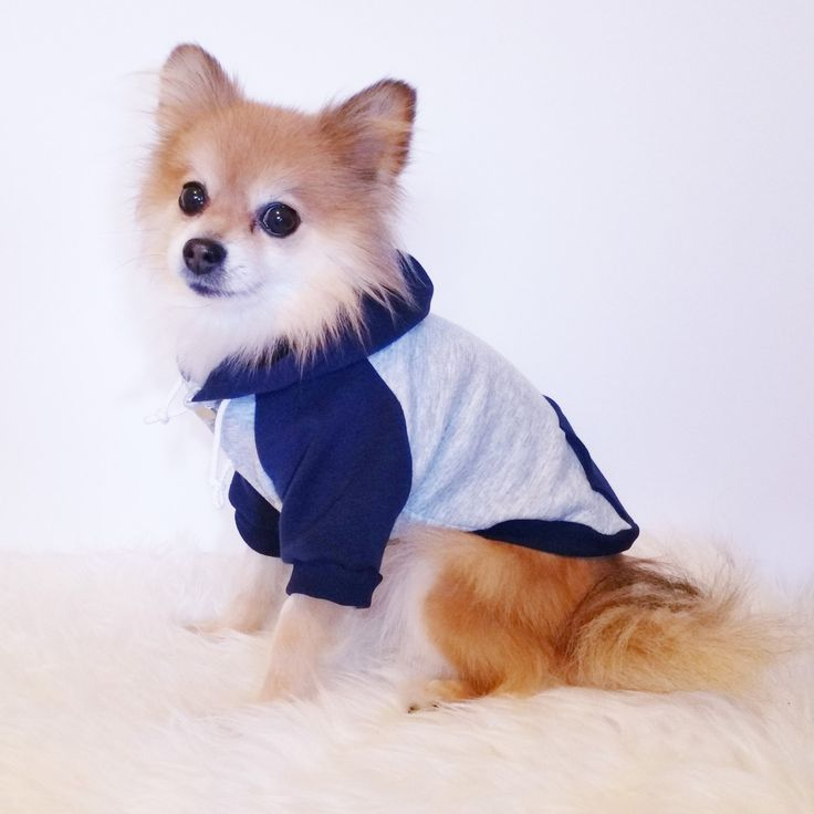 XS~4XL,Gray Navy Fleece dog hoodie,HANDMADE Dog Jacket,pet clothes,small dogs clothes,winter clothes,puppy hoodie,dog hoodies,puppy sweaters by puppydoggyclothes on Etsy