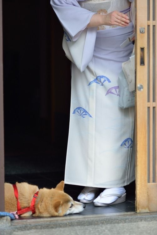 """ A geiko and her dog named Chiro by HOHAKA - blog """