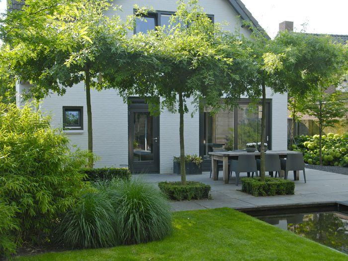 b ume als schattenspender an terrasse baume. Black Bedroom Furniture Sets. Home Design Ideas