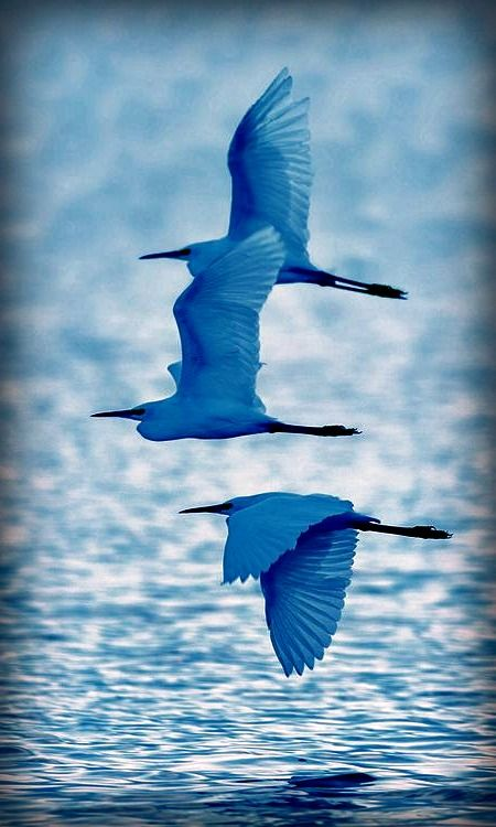 In flight. Beautiful.