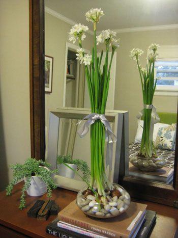 White Flowering House Plants 103 best growing houseplants images on pinterest | gardening