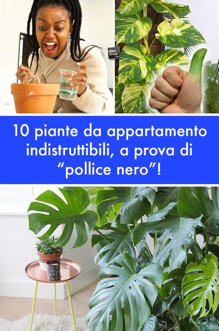 """Piante Da Appartamento Ambiente Buio piante da appartamento indistruttibili, a prova di """"pollice"""