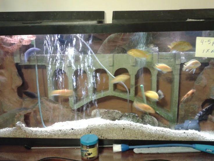 My (OC) DIY 3D aquarium background - Imgur