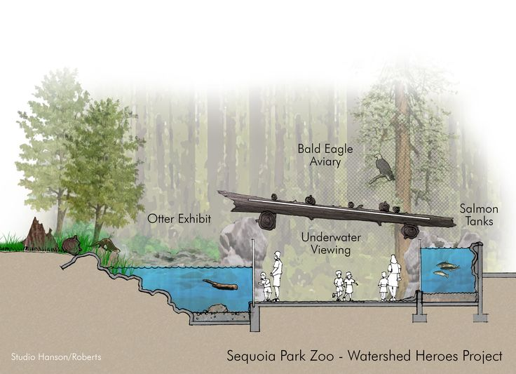Sequoia Park Zoo Watershed Heroes Section - Studio Hanson Roberts
