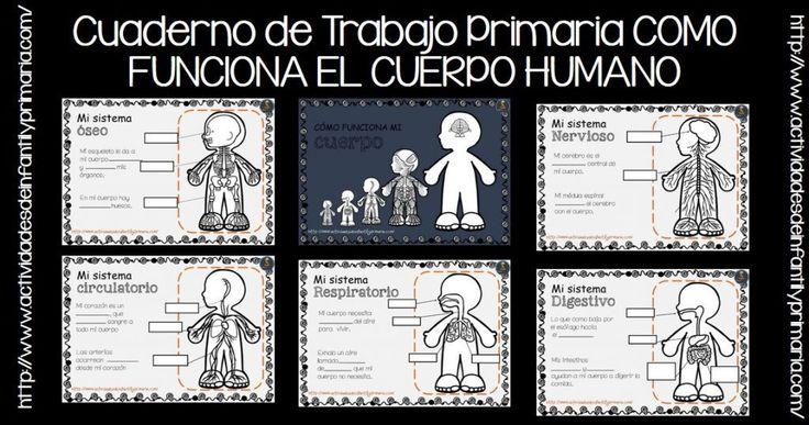 EL CUERPO HUMANO PARA NIÑOS Elcuerpo humanoestá formado por células que se agrupan en órganos. Los órganos o sistemas que poseemos son: locomotor (muscular y óseo), digestivo, respiratorio, endoc…