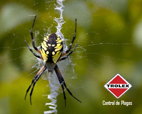 Hábitos y características de las Arañas de Jardín     Las arañas de jardín están presentes en muchos lugares alrededor del mundo. Reciben su nombre de su preferencia por habitar y alimentarse al aire libre y en los jardines.