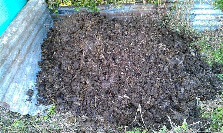 10 Best Images About Horse Manure On Pinterest Gardens
