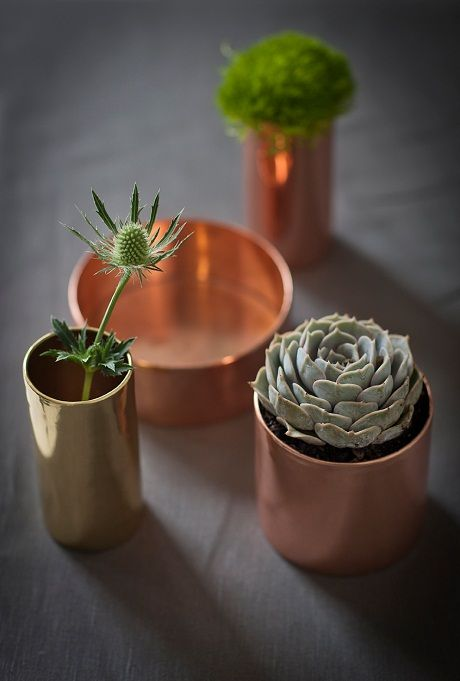 succulents in copper pots
