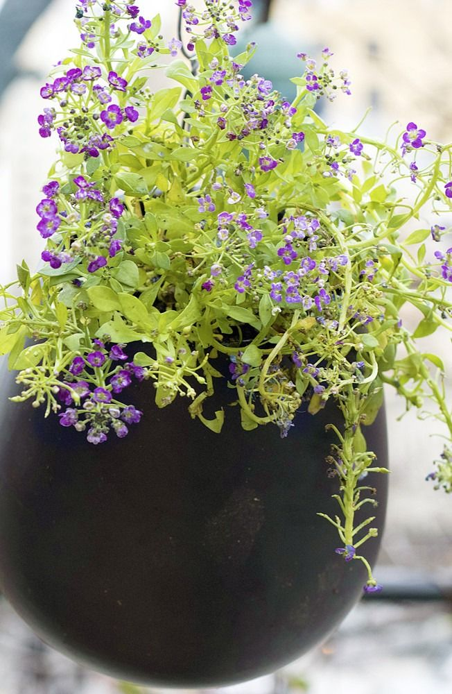 Looking for an easy outdoor DIY? Learn how to make simple container gardening plants for your porch or patio!