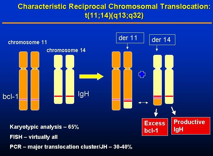 The chromosomal translocation characteristic of 70 percent of MCL(Mantel Cell Lymphoma) cases occurs between chromosomes 11 and 14 resulting in the overexpression of cyclinD1