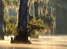 Louisiana Bayou: Absolutely Beautiful, Beautiful Places, Louisiana Cajun, Bayou Beautiful, Beautiful Bayou, Swamp Beautiful, Louisiana It, Louisiana Hom, Louisiana Bayous