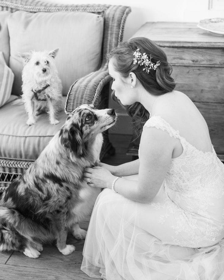 Bride getting love and approval of the final touches from her dogs at the bridal suite at Occidental Hotel. Captured by Stephanie Hopkins Photography.