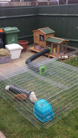 Amusement park for rabbits or just a fun way to connect two cages or a hatch and a run.