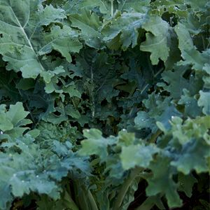 the annual test garden review meet the organic growers who test vegetables for this magazine