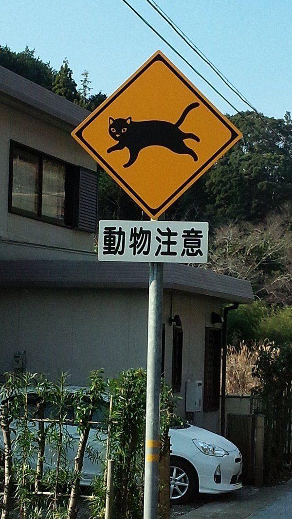 """Японские знаки """"осторожно, перебегающие дорогу животные"""" Япония, Дорожный знак, дорога, длиннопост"""