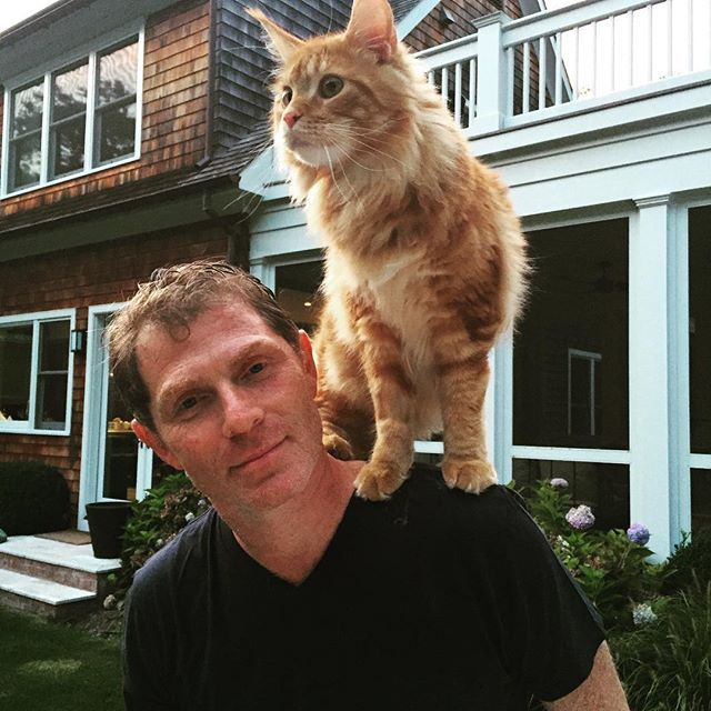 What Breed Is Bobby Flay S Cat