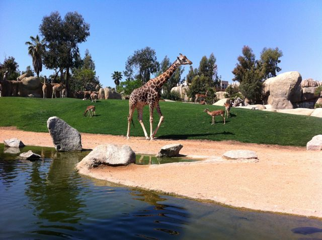 70 best images about Savanne inspiration on Pinterest  Zoos, Africa and Samsung