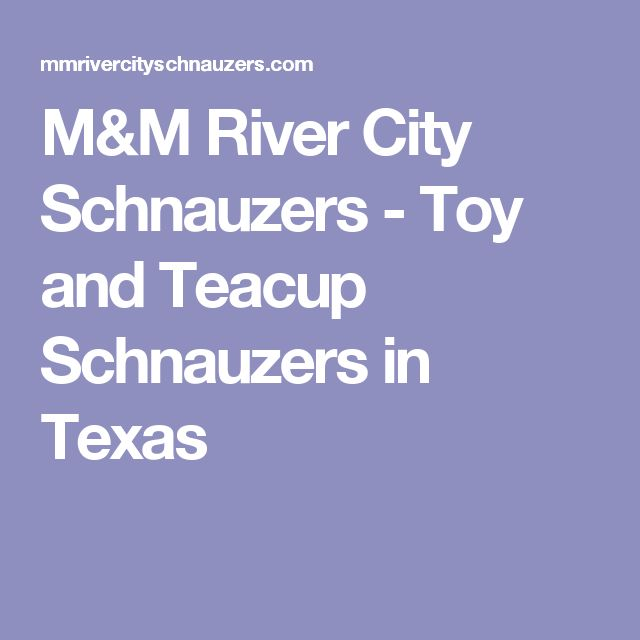 M&M River City Schnauzers - Toy and Teacup Schnauzers in Texas