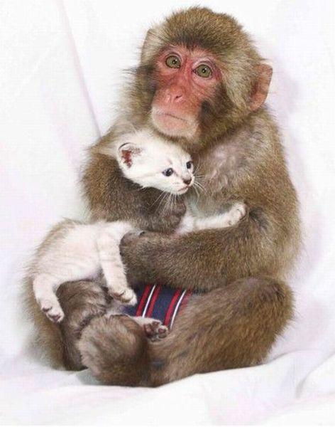 """Dees ees my keetty"": Animal Pics, Picture, Kitten, Cat, Best Friends, Animals Pets, Adorable Animals, Idea Monkeys, Emmas Animals"