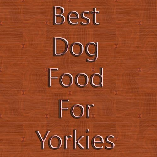 1000+ images about Best Dog Food For Yorkies on Pinterest | Yorkies, Yorkie and Best food for dogs