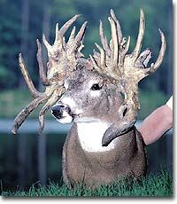 craziest antlers - Google Search