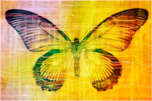 butterfly yellow texture