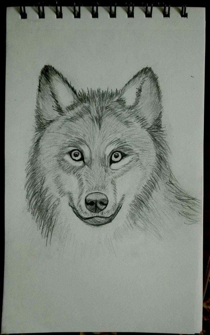 Cutie wolf, pencil