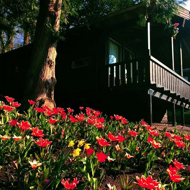 Spring has indeed sprung at Brockwood Hall