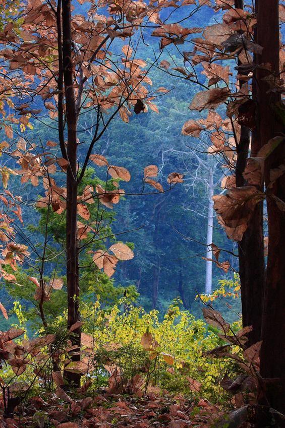 Corbett National Park, Tiger Reserve, Uttarakhand,India.