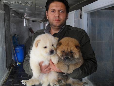 Evde Köpek Eğitimi | İstanbul köpek eğitimi Köpek Eğitimi - istanbulkopekegitimi.net Evde köpek eğitimi evinizde köpek eğitimi yerınde köpek eğitimi profesyonel köpek eğitmenleri evde köpek eğitim himeti sağlıklı köpek eğitimi von juliet