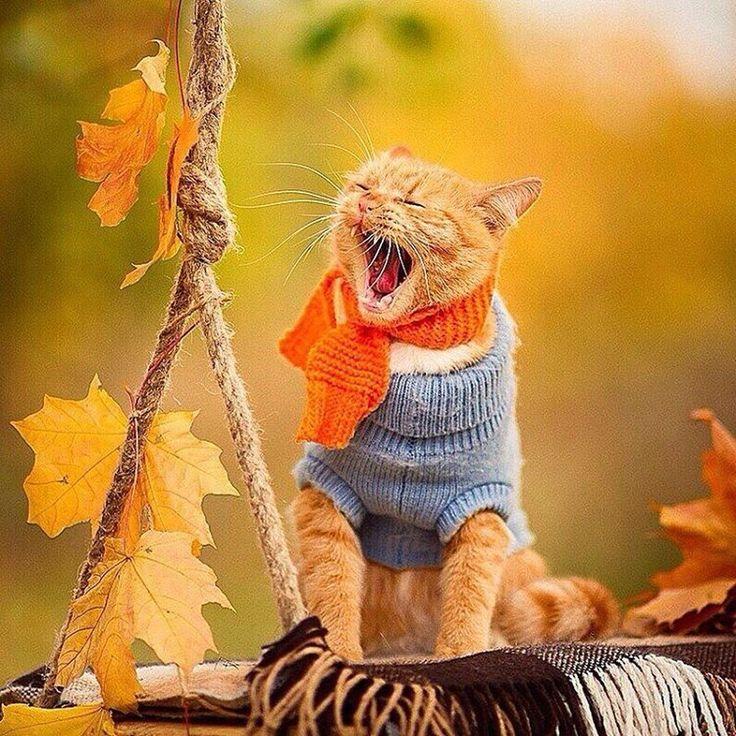 уютной осени, друзья! @tkanigood #galleria_arben #котэ #кот #рыжийкот #настроение #ткани #уют #листья #autumn #осень #cat #fabric #котики