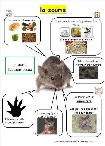 Après le modelage, mes élèves ont dessiné la souris verte lors de la journée des souris. Après avoir étudié ce petit animal à travers divers documents et cette petite fiche venant résumer la vie de la souris... fiche d'identité souris Ils ont ensuite...
